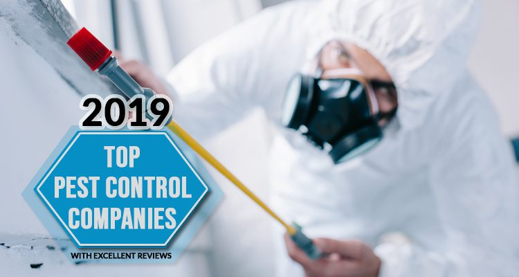 2019 Top Pest Control Companies With Excellent Review