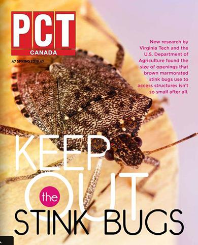 PCT-stinkbugs